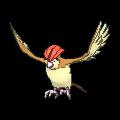 #017 Pidgeotto